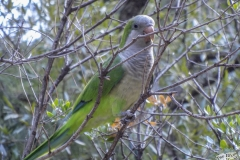 Grüne Vögel im Park