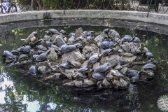 Schildkröten im Park