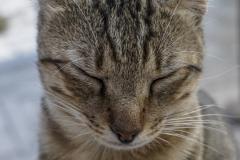 Die Katzen von Delphi