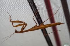 Unsere Freunde beim Zelten.. recht entspannte Insekten