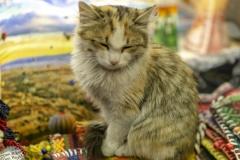 An jeder Ecke in der Türkei findet man Katzen