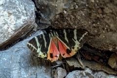Und ja es gibt Schmetterlinge (wenn auch nicht so viele)
